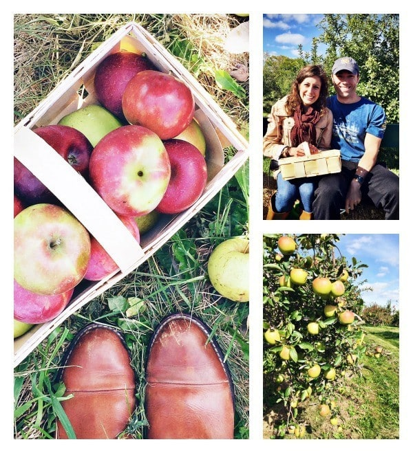 Apple Picking at Elegant Farmer