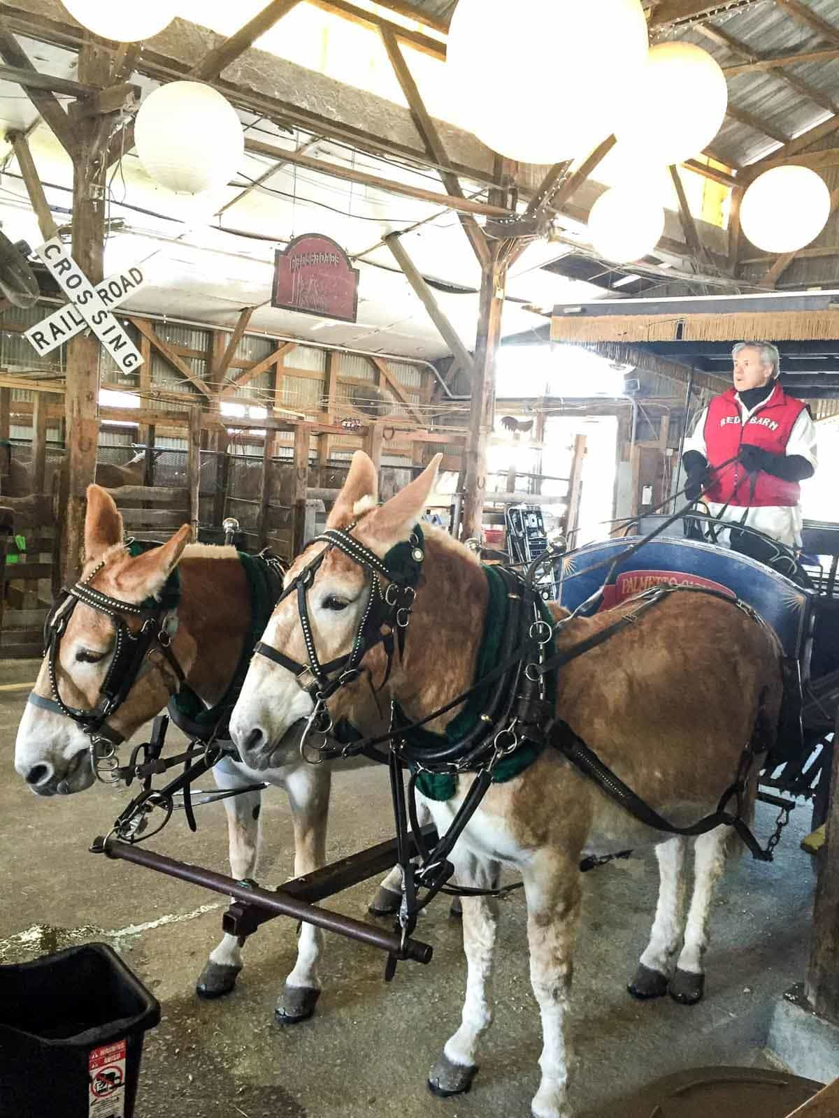 Best things to do in Charleston: Take a carriage tour with Palmetto Carriage Works