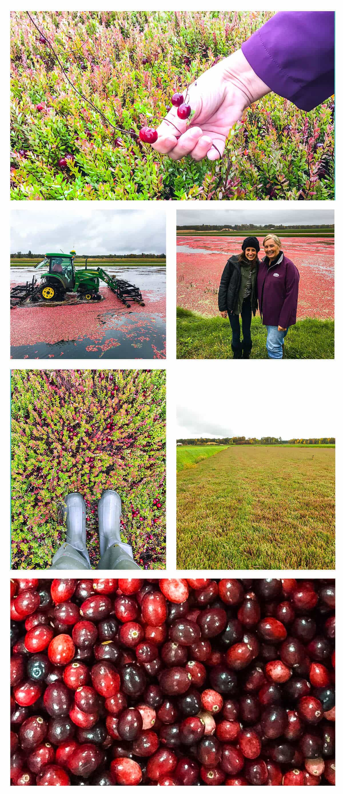 Cranberry Bog and a recipe for slow cooker Brussels Sprouts