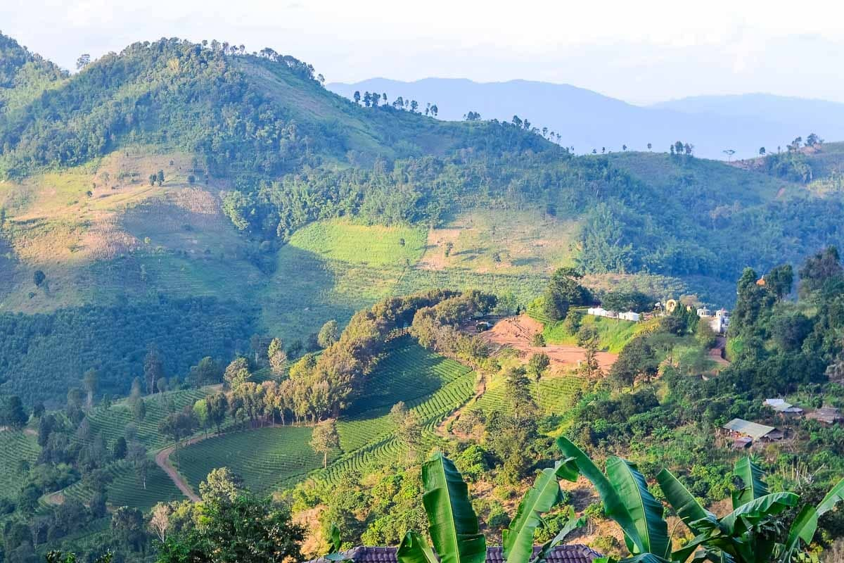 Northern Thailand Hiking—Tea Plantations