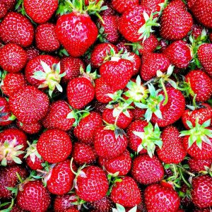 Fresh Strawberries picked in Wisconsin