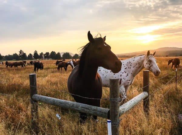 Horses at Sunriver Resort